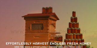 Save the Bees Effortlessly Harvest Endless Fresh Honey
