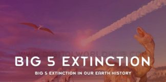 Big 5 Extinction In Our Earth History