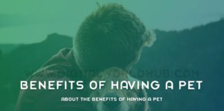 About The Benefits Of Having A Pet